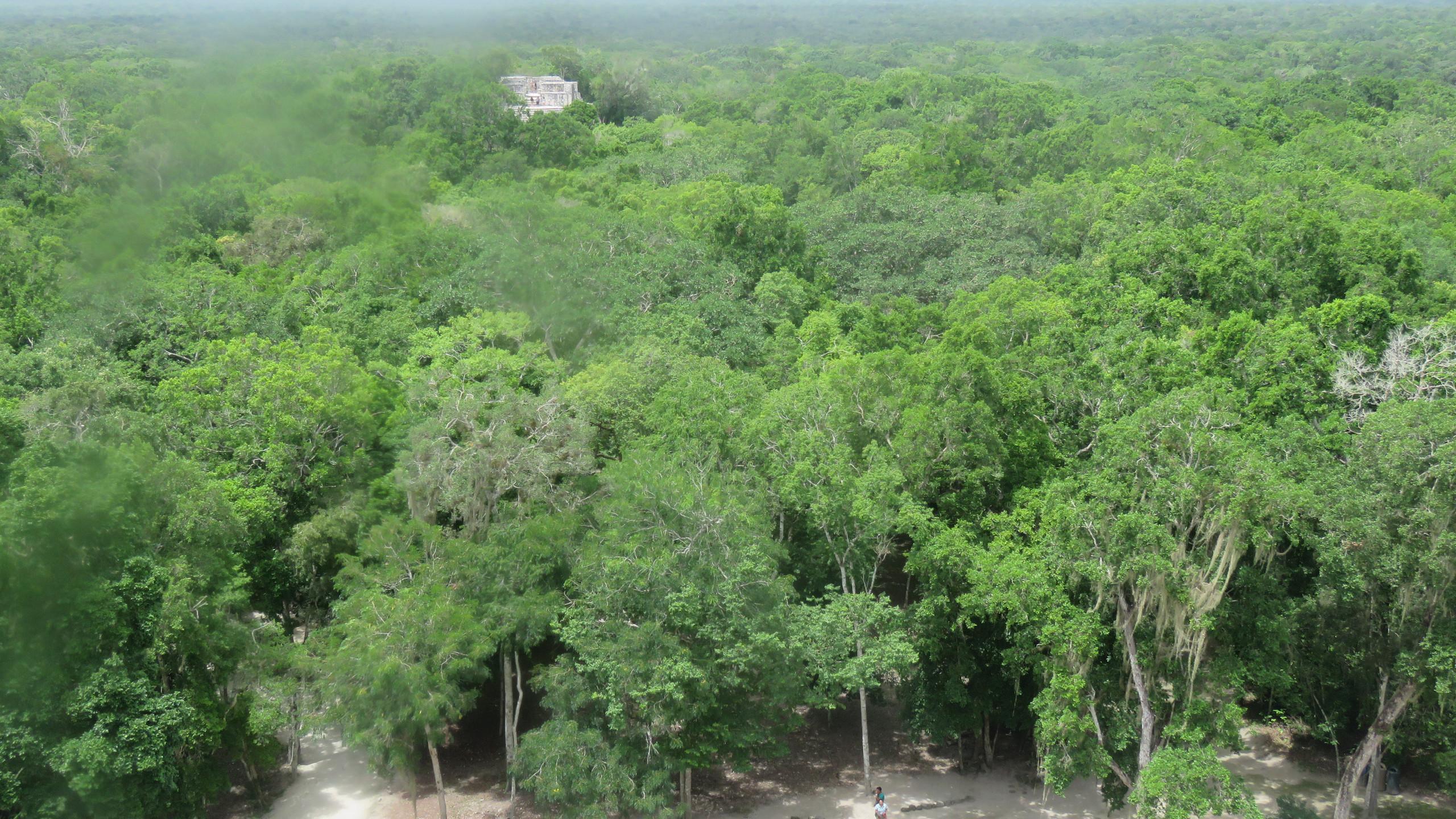Panorama da piramide maya di Calakmul
