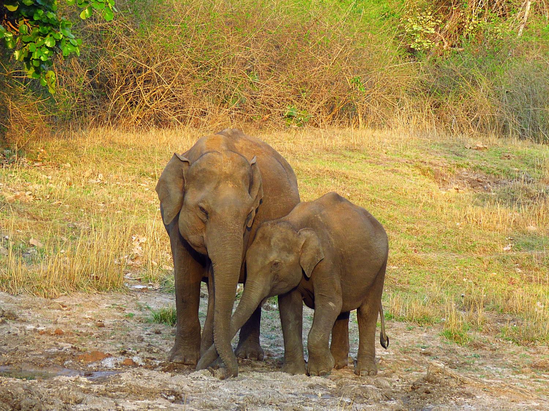Mamma con cucciolo di elefante Bandipur National Park_edited