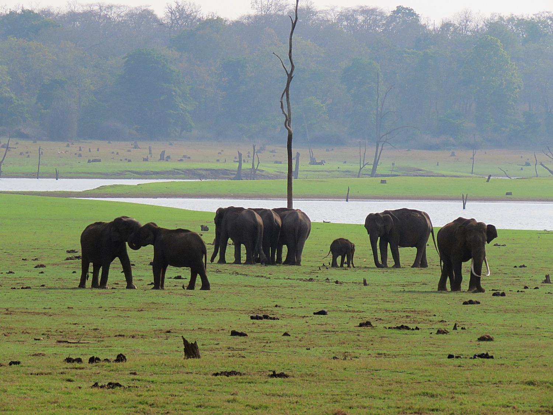 Branco di elefanti al Nilgiri National Park_edited