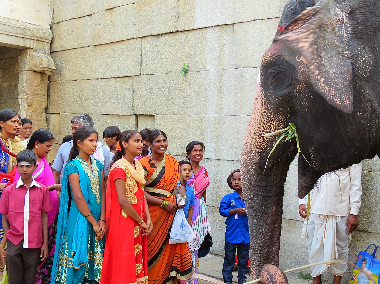 Offerte all'elefante sacro in Hampi