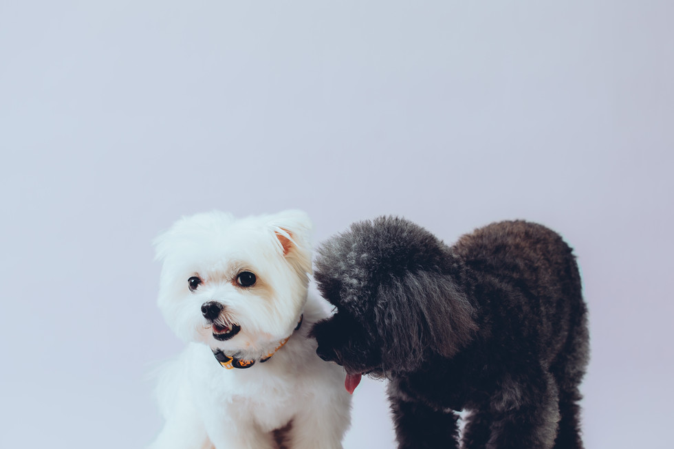 Bagel / Luna