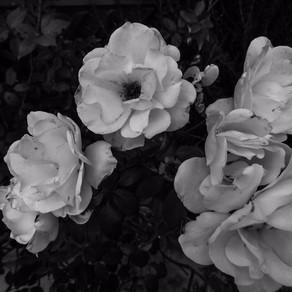 Nori Blooms - Milicent Fambrough