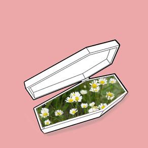 push up daisies reinterpretation - ritusri halambi & saachi gupta