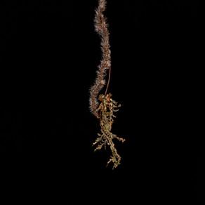 photo series: death & nature - sarah boada