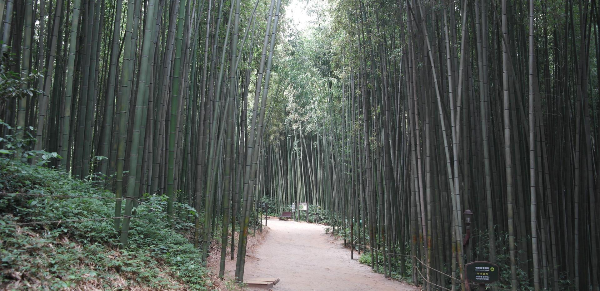 Damyang Bamboo Forest-03.jpg