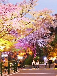 Spring-09.jpg