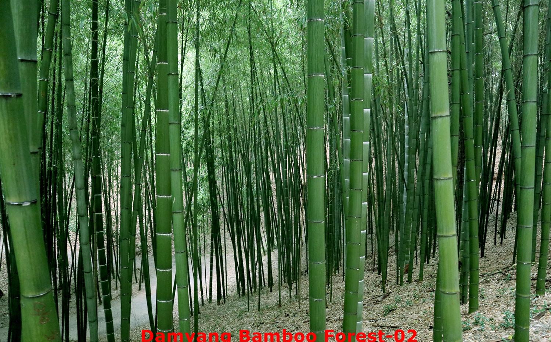 Damyang Bamboo Forest-02.jpg
