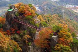 Autumn Maple-1