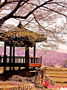 Spring Cherry Blossom-05.jpg
