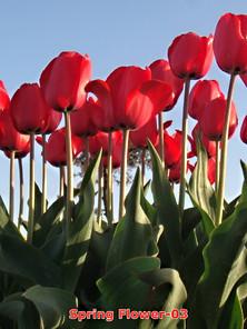Spring flower-03.jpg