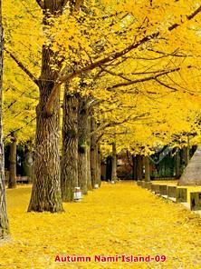 Autumn-09.jpg