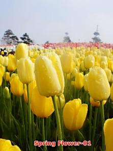Spring flower-01.jpg