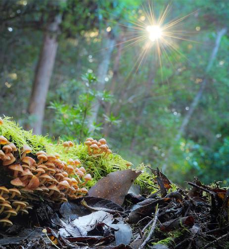 Life on a rotting log, Hypholoma sp.