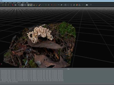 Exploring 3D Fungi