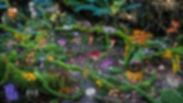fungi desktop background