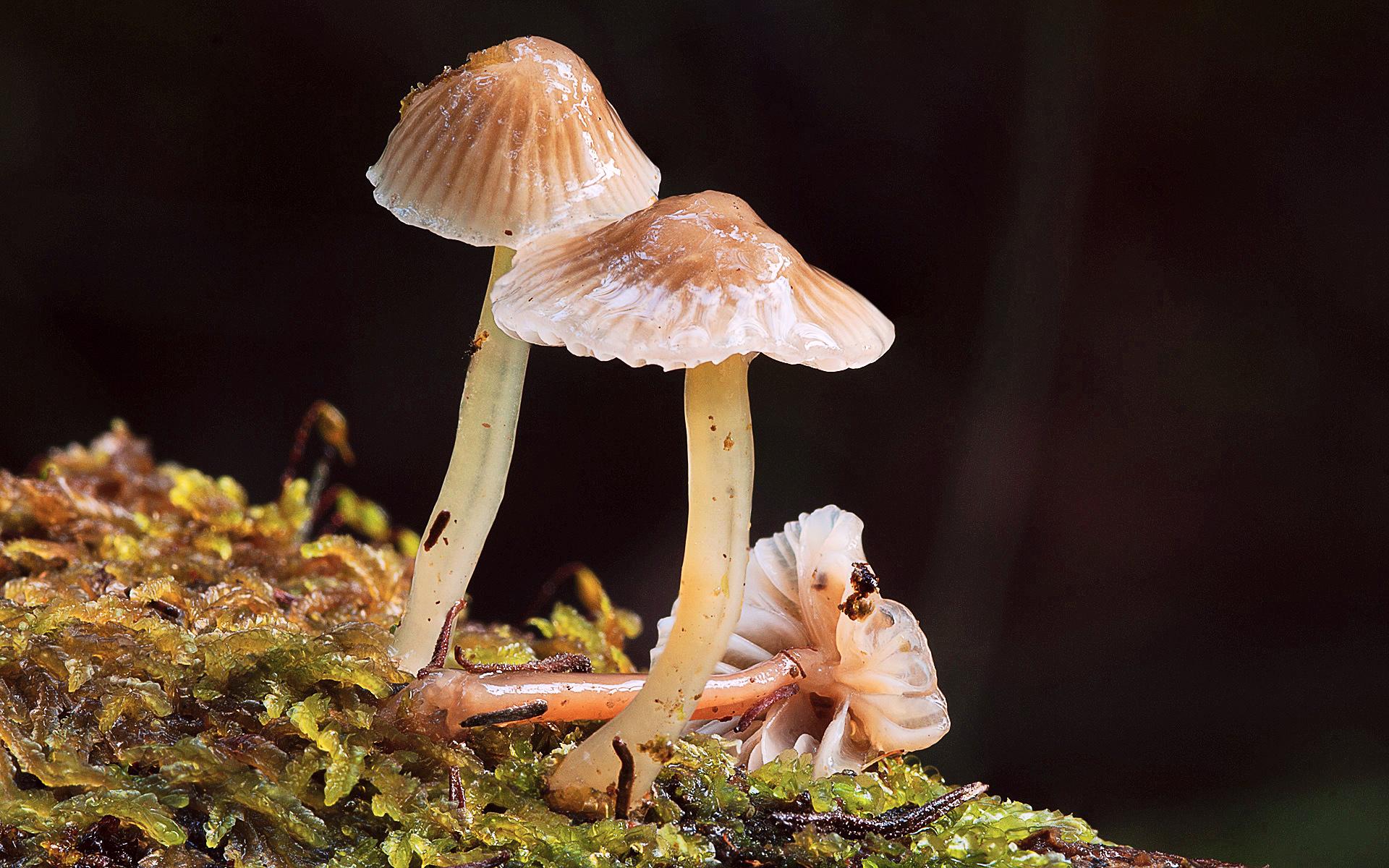 Tasmanian fungi photography by Heather Elson