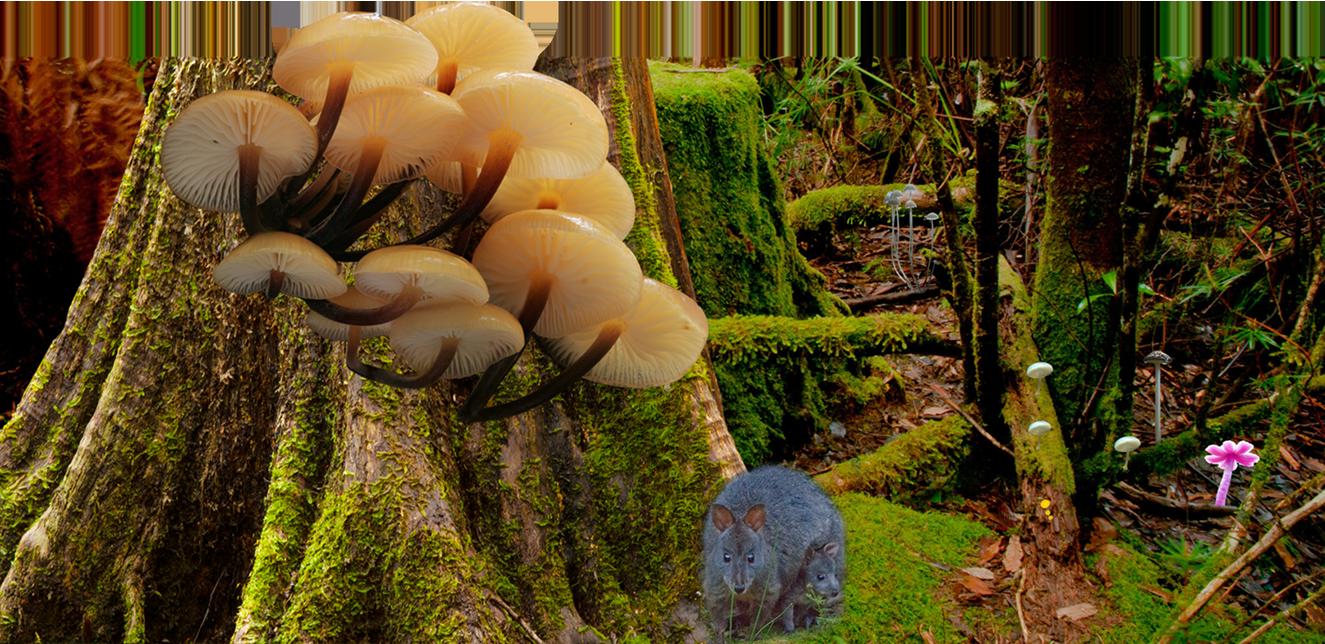Fungi tours and workshops - Far South Fungi - Tasmania