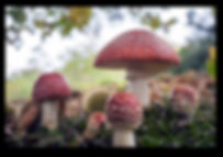 Fungi workshops with Alison Pouliet