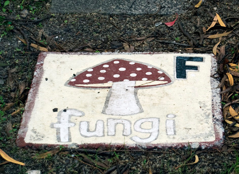 Volunteer Carol handpainted this mushroom stepping stone for the children to enjoy.
