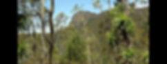 Tasfungi - Tasmanian ecosystems