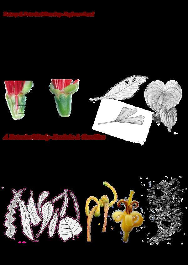 Botany-Art-classes.png