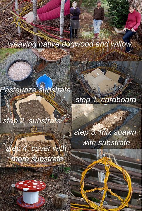 Planting a fungi garden