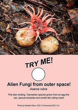 Alien Fungi From Outer Space - Freakishly Frightening Fungi From Tasmania