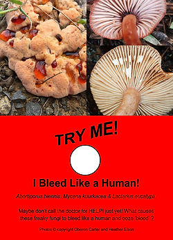 BleedingFungi_web.jpg