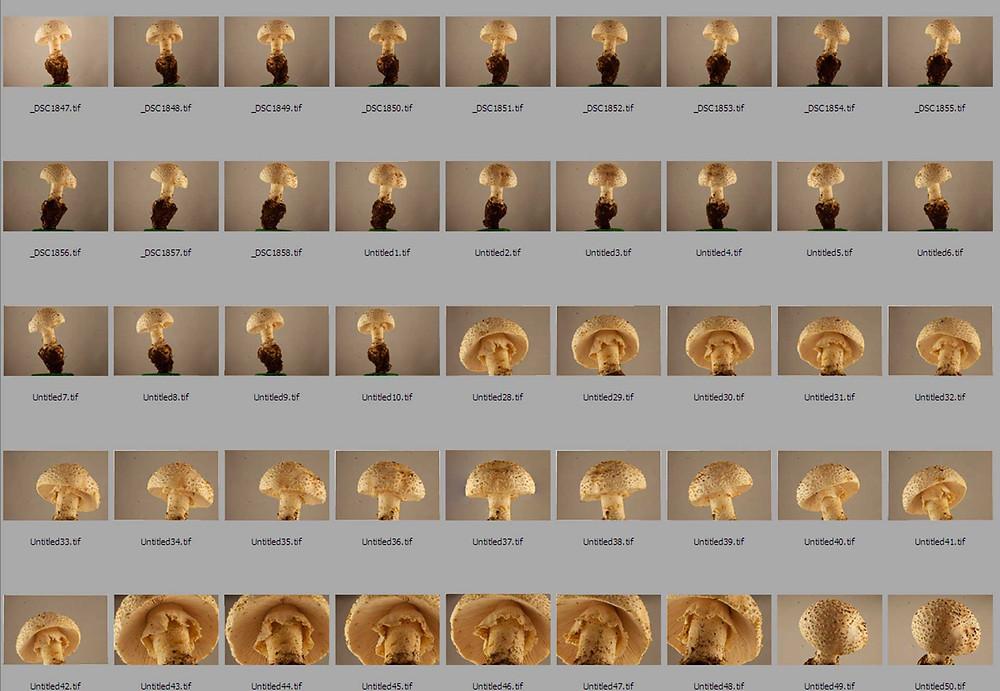 Fungi photogrammetry
