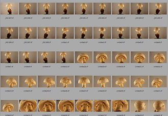 3D fungi mushrooms
