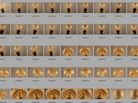 3D + 360 Fungi Photogrammetry