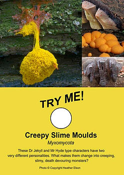 Creepy Slime Moulds  - Freakishly Frightening Fungi From Tasmania