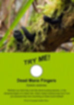 Dead Man's Fingers - Freakishly Frightening Fungi From Tasmania