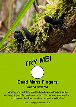 Dead Man's Fingers - Freakishly Frightening Fungi From Tasmania