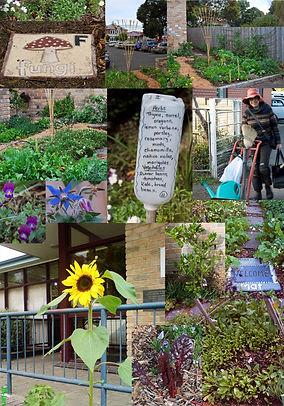 Cygnet library edible garden