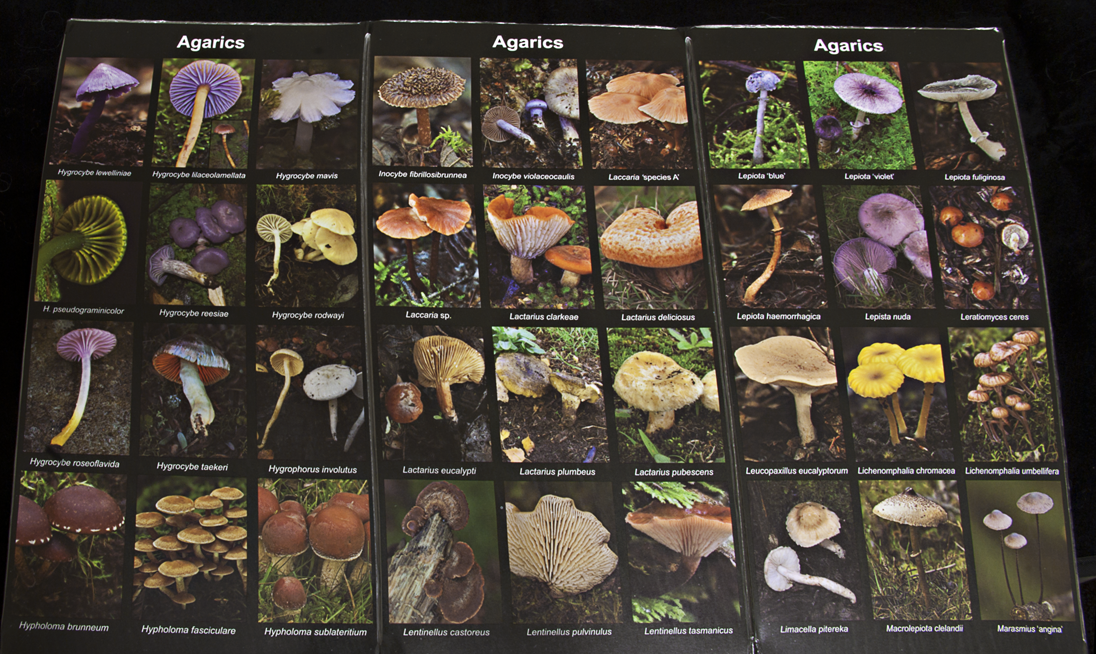 Fungi Flip (inside view)