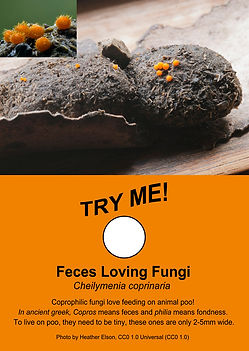 Feces Loving Fungi - Freakishly Frightening Fungi From Tasmania