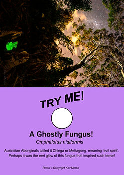 A Ghostly Fungus - Freakishly Frightening Fungi From Tasmania