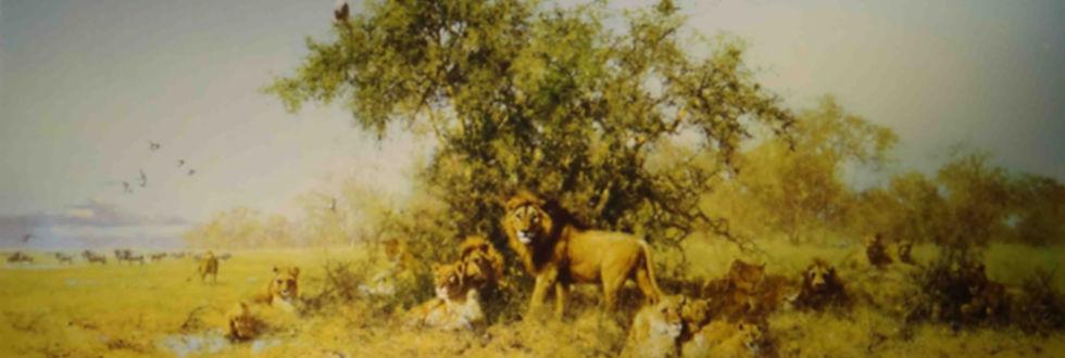 davidshepherd-africa-large_edited_edited.jpg