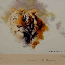 Tiger's head 1983