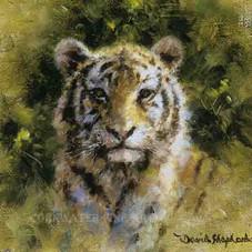 Tiger cub cameo