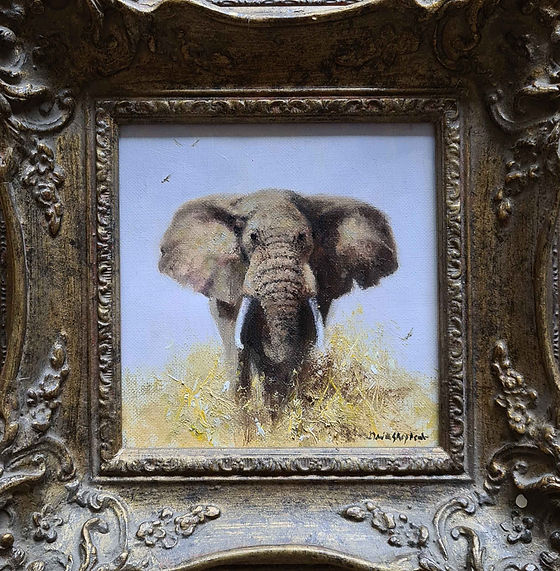 davidshepherd-original-elephant8-framed.