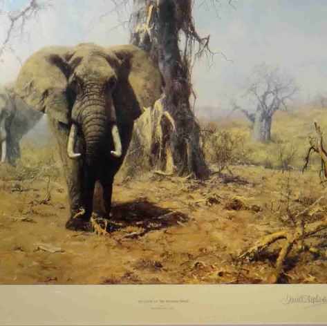 The Land of the Baobab Trees