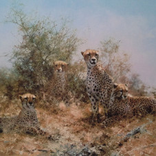 Cheetah - Silkscreen