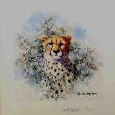 Cheetah (Cameo)