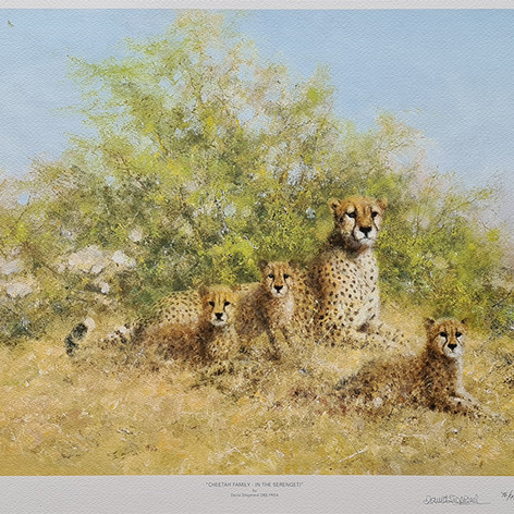 Cheetah Family in the Serengeti