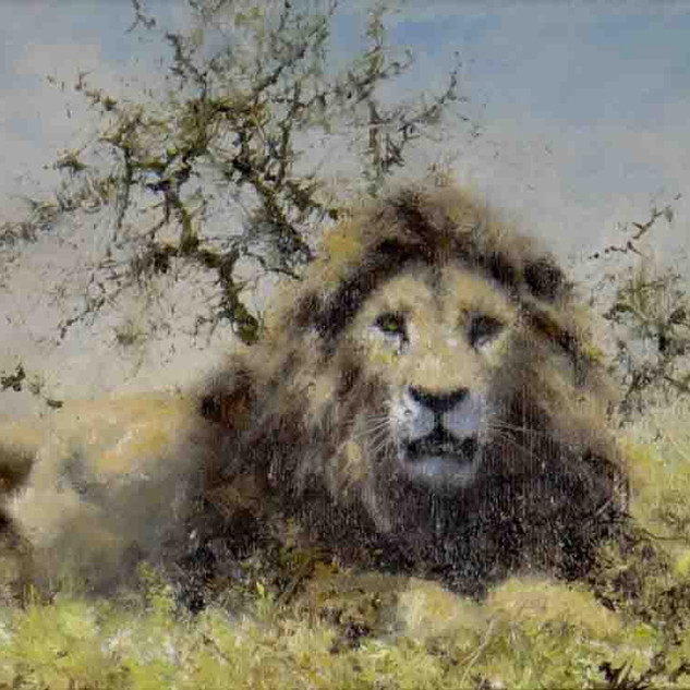 Lion Original Painting