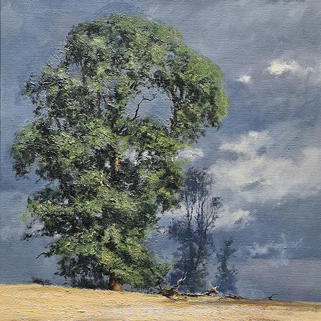 Evening Light Original Painting