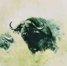 davidshepherd-bfbuffalo.jpg