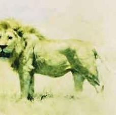Lion (Big Five collection)